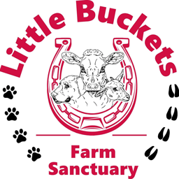 Logo for Little Buckets Farm Sanctuary